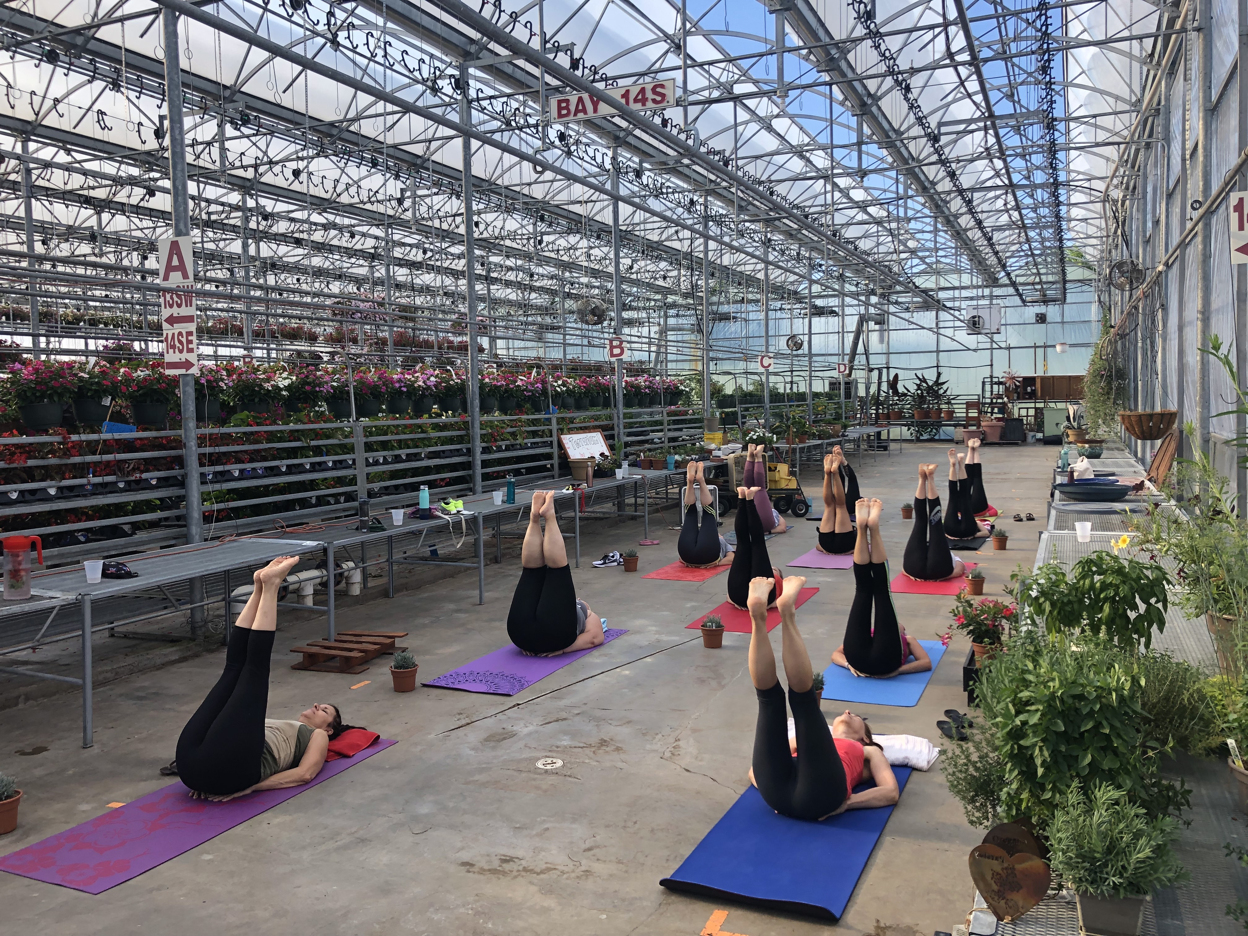Yoga in the Greenhouse @ America's Best Flowers!